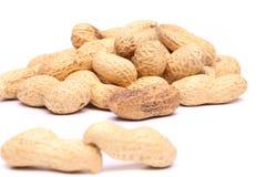 2 арахиса в крупном плане на предпосылке арахиса Стоковое Фото