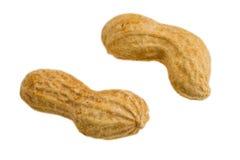 арахисы Стоковое Изображение RF