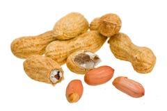 арахисы Стоковые Изображения RF
