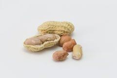 Арахис изолированный на белизне, арахис, сухой арахис Стоковые Фото