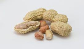 Арахис изолированный на белизне, арахис, сухой арахис Стоковые Изображения RF