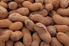 Арахис или groundnut стоковое изображение rf