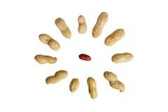 арахис стоковые фото