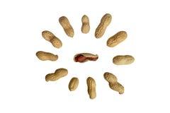 арахис Стоковые Изображения