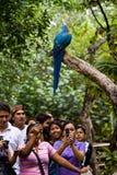 Ара в Parque Historico, культурном и стоковые изображения rf