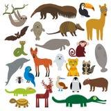 Ара гиацинта енота с гривой волка дельфина обезьяны ламантина горжетки броненосца морского котика летучей мыши лама муравьед лени иллюстрация штока