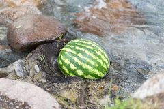 Арбуз в реке Стоковые Фото