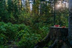 Арбуз в солнечном свете Стоковое фото RF