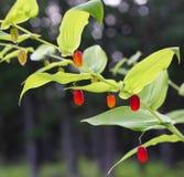 арбуз лета ягод зрелый Стоковая Фотография RF