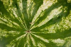 Арбуз текстуры Стоковое фото RF