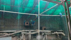 Арена птиц Стоковое фото RF