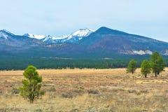Аризона покрыла снежок горы Стоковое Фото