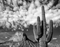 Аризона Стоковые Изображения RF