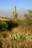 Аризона Стоковая Фотография RF