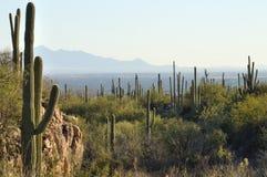 Аризона tucson Стоковые Изображения RF