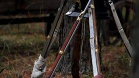 Армия ` s Наполеона в лесе, в 1812, француз дает полный газ около дерева сток-видео