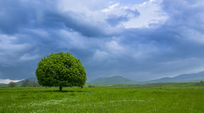 Армянка outdoors стоковое изображение rf