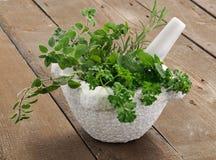 ароматичные травы Стоковое Изображение RF