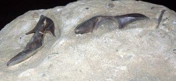 Артефакт от титанического стоковое фото rf