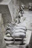 Археологические раскопки армии терракоты Стоковое Изображение RF