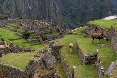 Археологическое место Machu Picchu, Перу Стоковое Изображение