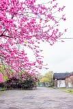 Архитектура сада и цветение персика Стоковые Изображения RF