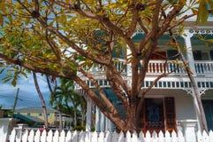 Архитектура Key West и тропические деревья стоковые фотографии rf