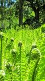 Архитектурноакустический сад Стоковая Фотография RF