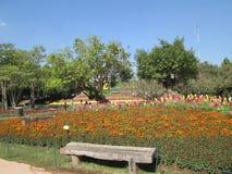 АСЕАН цветет featival цветки Стоковое Изображение RF