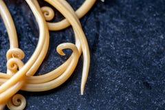Аскаридоз заболевание причиненное паразитными lumbricoides Ascaris roundworm для образования стоковые фото