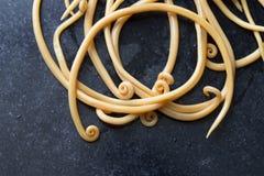 Аскаридоз заболевание причиненное паразитными lumbricoides Ascaris roundworm для образования стоковое фото