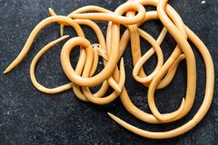 Аскаридоз заболевание причиненное паразитными lumbricoides Ascaris roundworm для образования стоковая фотография