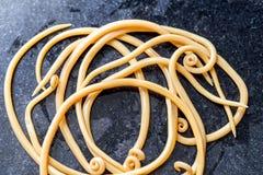 Аскаридоз заболевание причиненное паразитными lumbricoides Ascaris roundworm для образования стоковое изображение