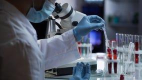 Ассистент лаборатории принимая каплю крови для того чтобы обнаружить антитела и инфекции стоковые фотографии rf