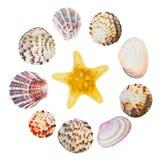 Ассортимент индивидуально изолированных раковин моря стоковое фото