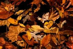 Ассортимент листьев осени Стоковые Изображения