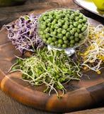 Ассортимент микро- зеленых цветов Растя листовая капуста, альфальфа, солнцецвет, ar стоковая фотография rf