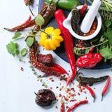 Ассортимент перцев и трав chili Стоковые Изображения
