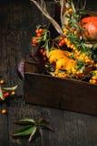 Ассортимент различных тыкв и ягод Стоковое Изображение