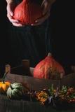 Ассортимент различных тыкв и ягод Стоковые Фото