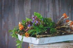 Ассортимент свежих трав Стоковое фото RF