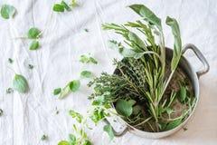 Ассортимент свежих трав Стоковая Фотография