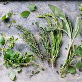 Ассортимент свежих трав Стоковые Изображения RF