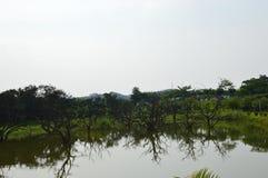 Астетический китайский сад Стоковые Фотографии RF