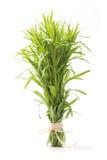 астрагон травы пука Стоковые Фотографии RF