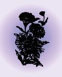 Астра иллюстрации на фиолетовой предпосылке Стоковые Изображения