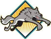 Атаковать дикой собаки серого волка скача Стоковая Фотография RF