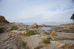 Атлантическая флора около пляжа Samil в Виго, Виго, Галиции, Испании Стоковые Фотографии RF