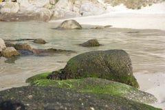 Атлантическая флора около пляжа Samil в Виго, Виго, Галиции, Испании Стоковая Фотография RF