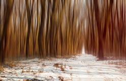Атмосфера леса зимы Стоковое Изображение RF